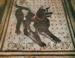 le-chien-latin